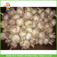 Jinxiang Chinese Wholesale Fresh Normal White Garlic 5.5CM Mesh Bag In Carton For Brazil